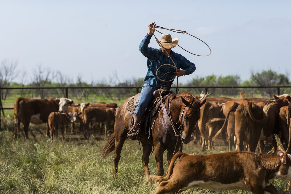 Buy Cowboys of the Waggoner Ranch today and learn about this iconic ranch